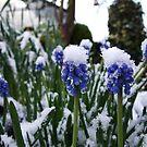 Winter by Patje