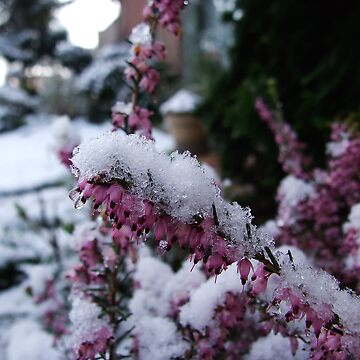 Flowers in the snow by Patje