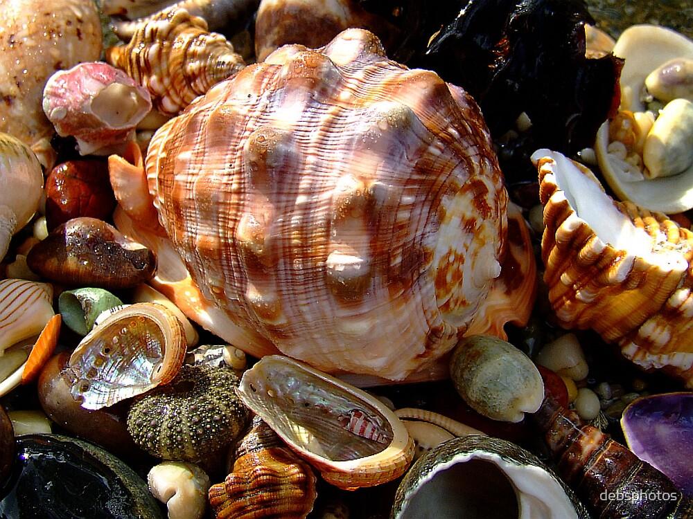 Beach Jewels.... by debsphotos