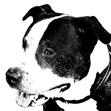 american staffordshire terrier art by marasdaughter