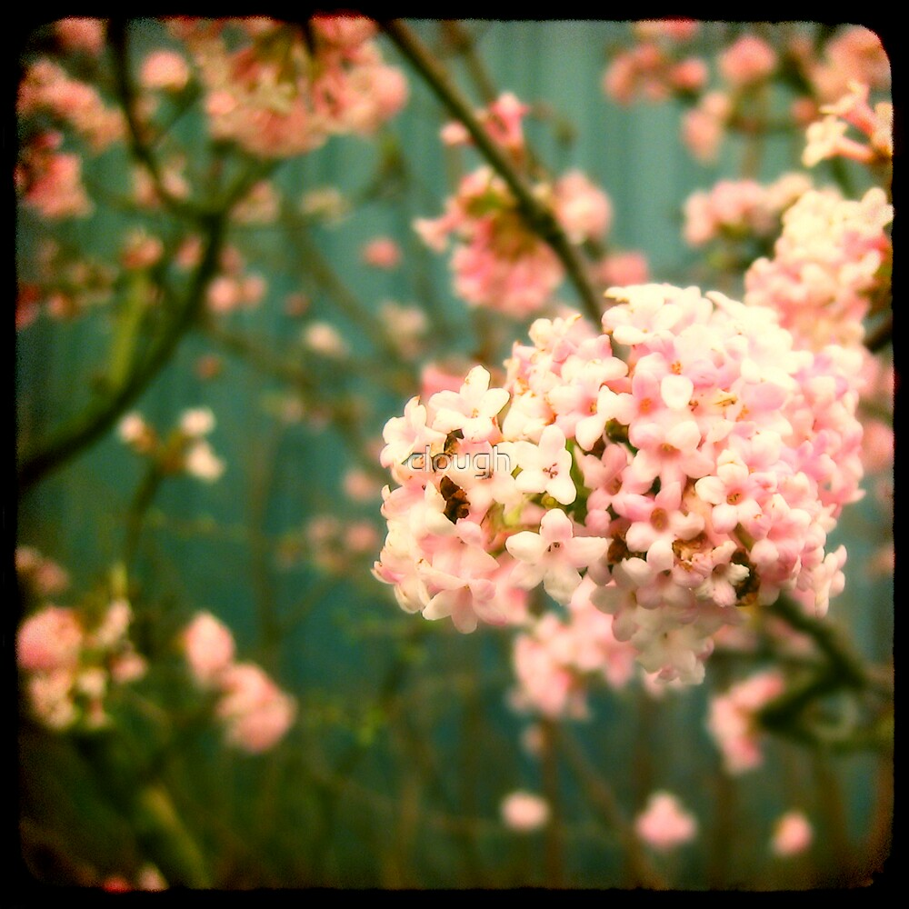 pink viewfinder by clough