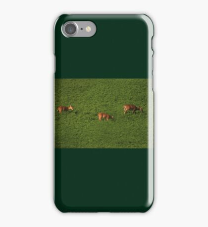 Deer in Bean Field iPhone Case/Skin
