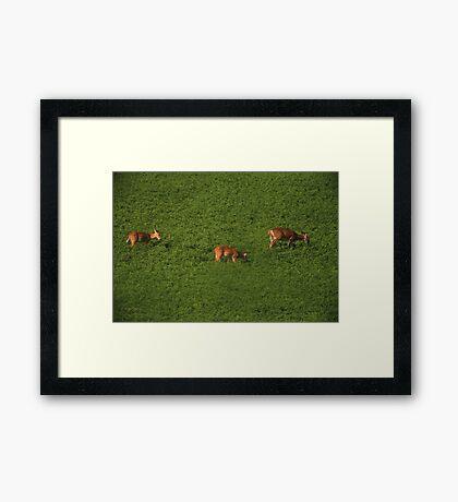 Deer in Bean Field Framed Print