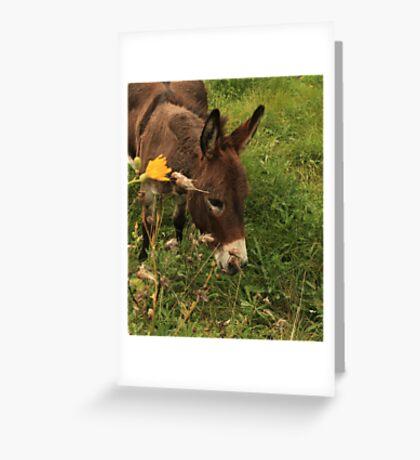 Hot Wheezing Donkey Greeting Card