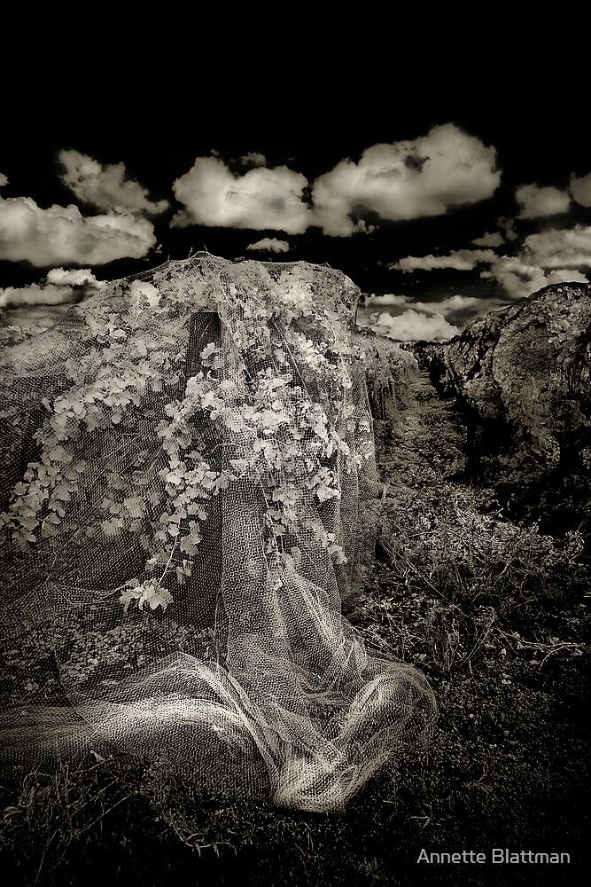 Veiled Vines 2 by Annette Blattman