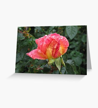 Wet and Wild Rose Greeting Card