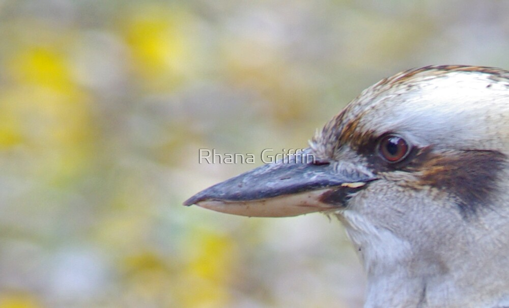 You Lookin At Me? by Rhana Griffin