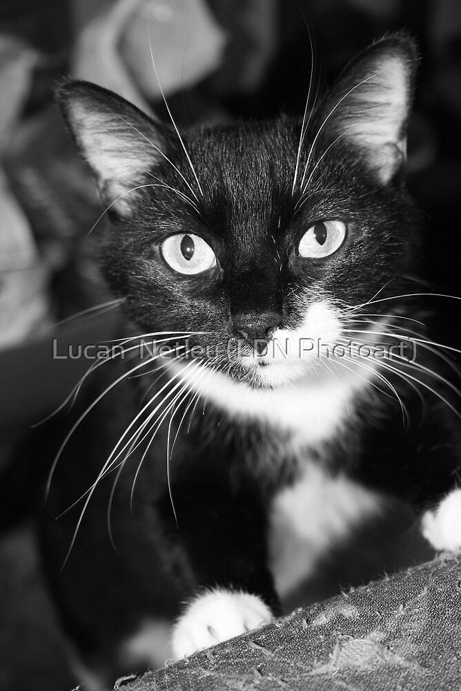 what you got there??? by Lucan  Netley (LDN Photoart)