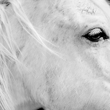 A Horse With No Name by LaurieMinor