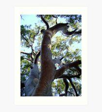 One BIG Tree Art Print