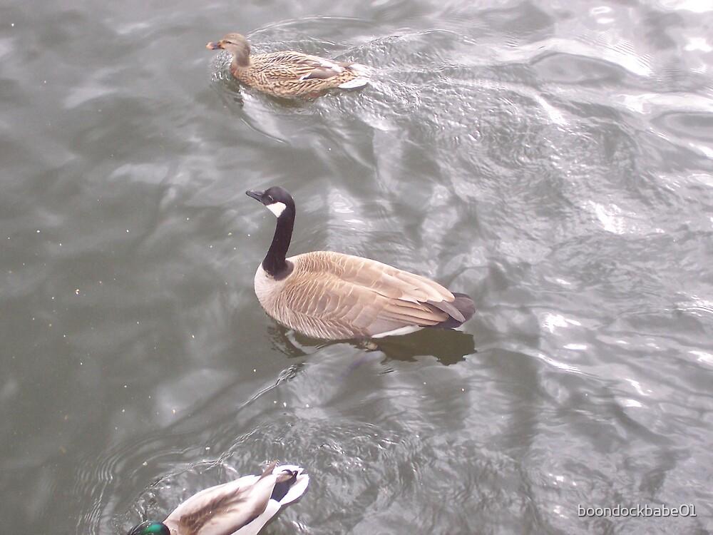 Duck, Duck, Goose by boondockbabe01