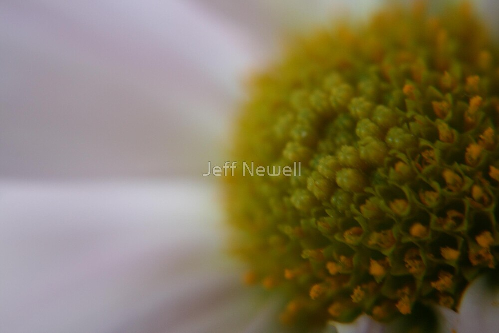 Spring bloom by Jeff Newell