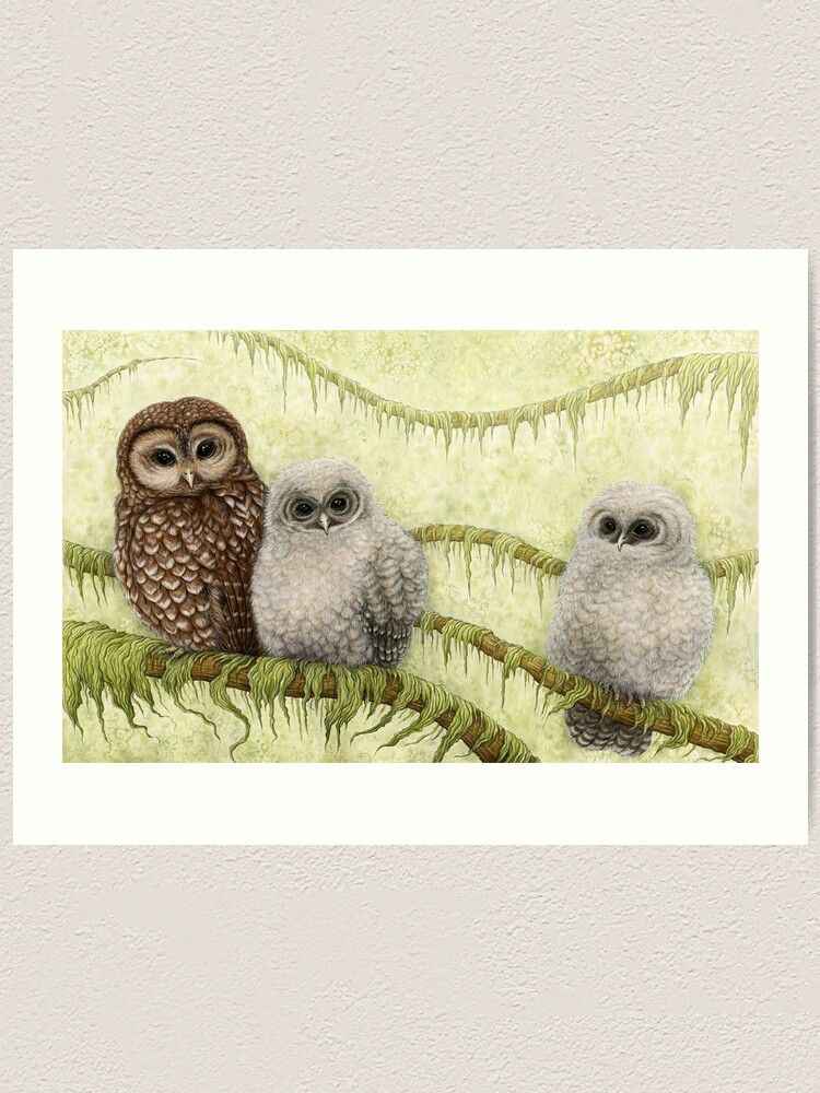 Alternate view of Northern Spotted Owls (Strix occidentalis caurina) Art Print