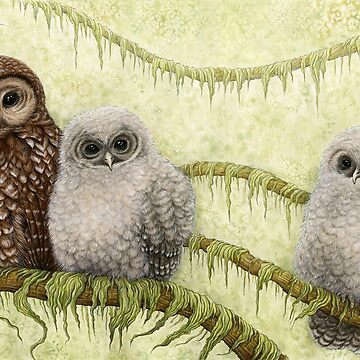 Northern Spotted Owls (Strix occidentalis caurina) by OzureFlame