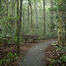 Stop for a little rest in the Rainforest by Clare Colins