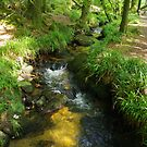 Draynes Wood, Golitha by lezvee