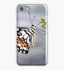 Colorful butterfly with white, black and orange wing decoration on a plant  iPhone Case/Skin