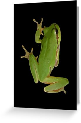Cute Climbing Green Tree Frog by taiche