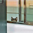 Baci in the Bathtub by Mark Ross