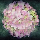 Hydrangea Ball by Astrid Ewing Photography