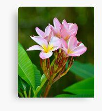 Pretty Pink Plumeria Canvas Print