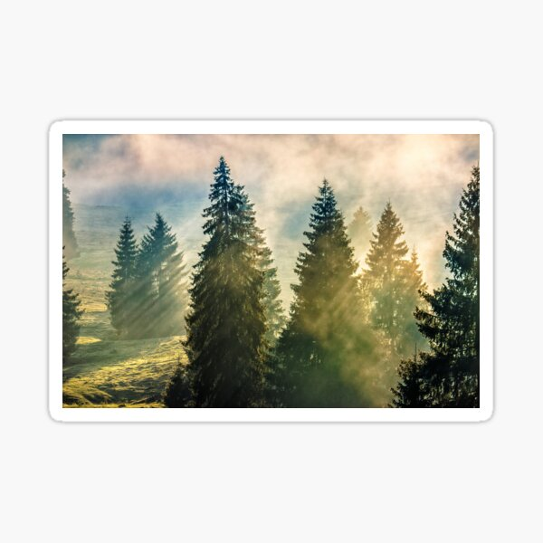 fog in the conifer forest Sticker