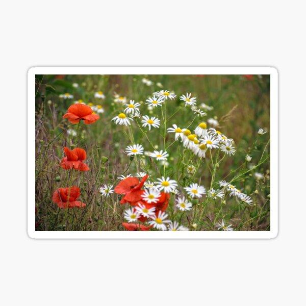 poppy and daisy flowers background Sticker