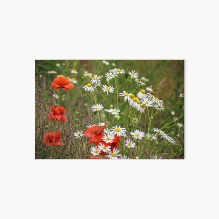 poppy and daisy flowers background Art Board Print