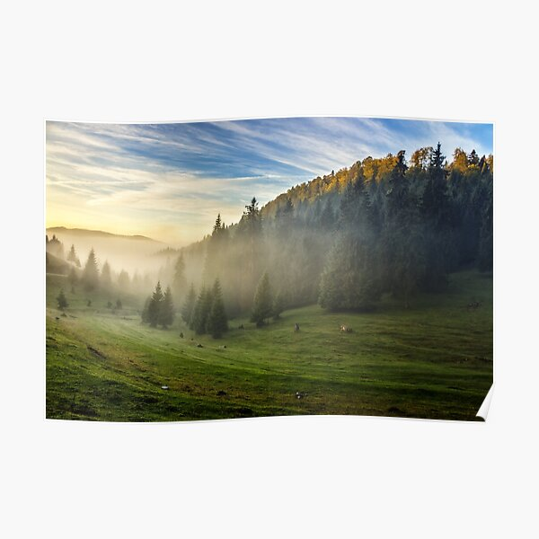 spruce forest on a hill side in fog Poster