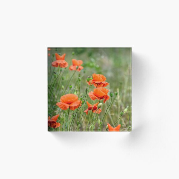 red poppy flowers among the grass Acrylic Block