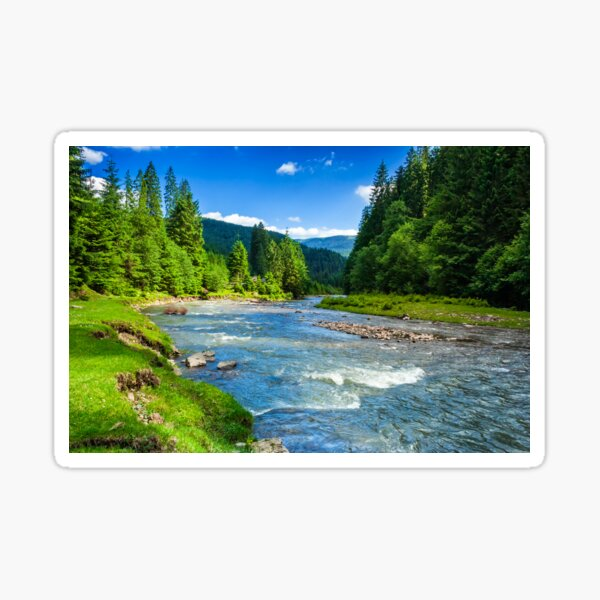 Mountain river in spruce forest Sticker