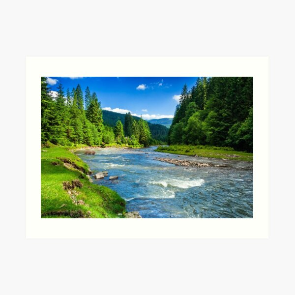 Mountain river in spruce forest Art Print