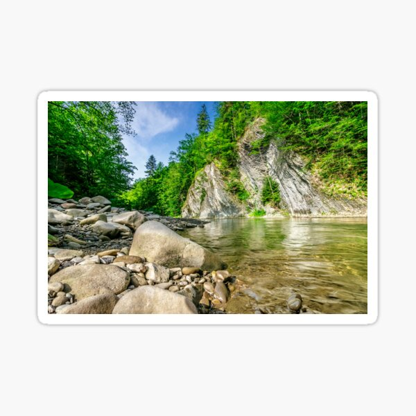 shore of forest river Sticker