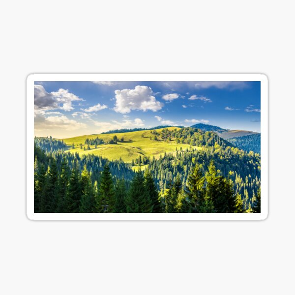 coniferous forest on the hill Sticker