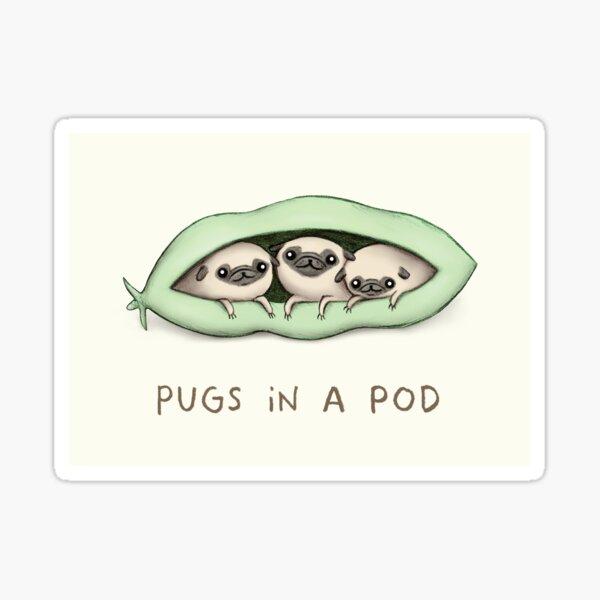 Pugs in a Pod Sticker