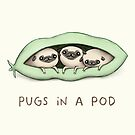 Pugs in a Pod by Sophie Corrigan