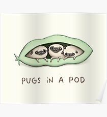 Pugs in a Pod Poster