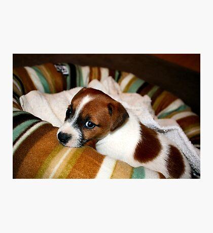 Puppy-dog Eyes Photographic Print