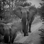 Two Identical Jumbos by Richard Shakenovsky