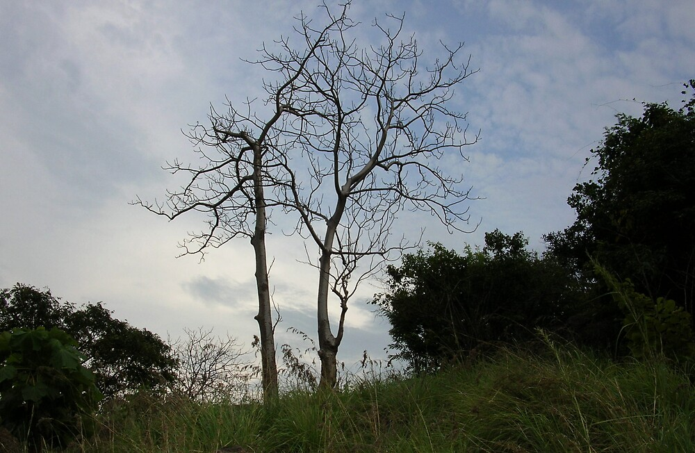 The bare tree by nisheedhi
