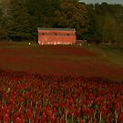 Crimson Clover Carpet by shutterbug3070