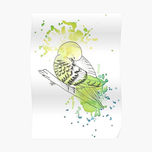 Wellensittich - Aquarell Poster