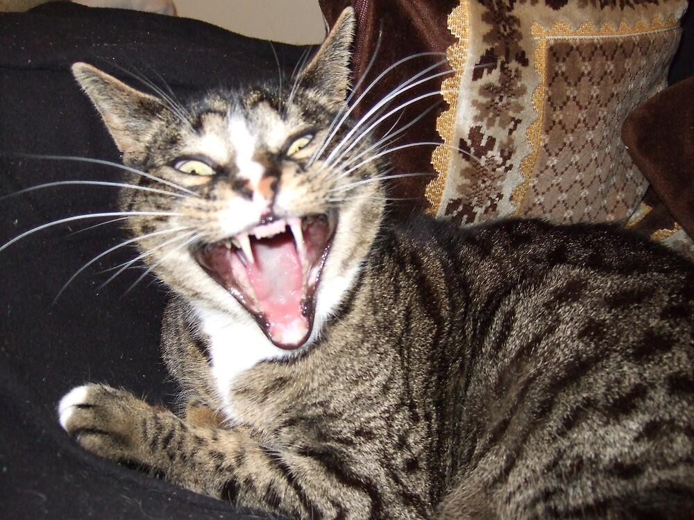 Yawning by Shane Kaka