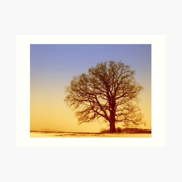 Tree Silhouette in Twilight Art Print