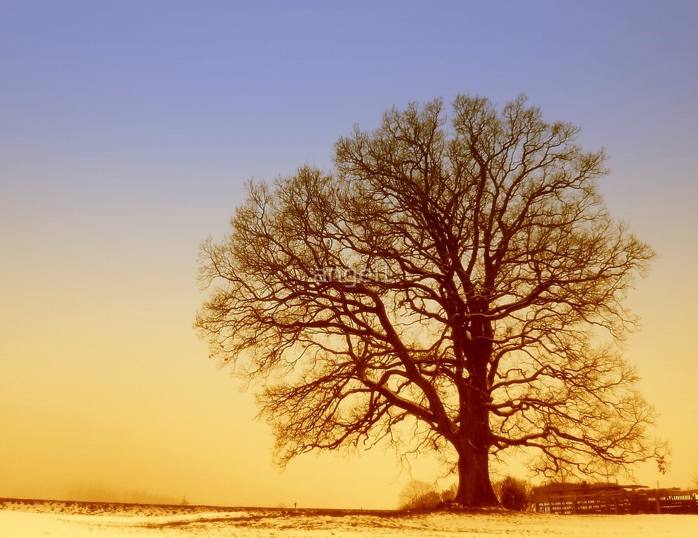 Tree Silhouette in Twilight by ©The Creative  Minds