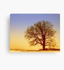 Tree Silhouette in Twilight Canvas Print