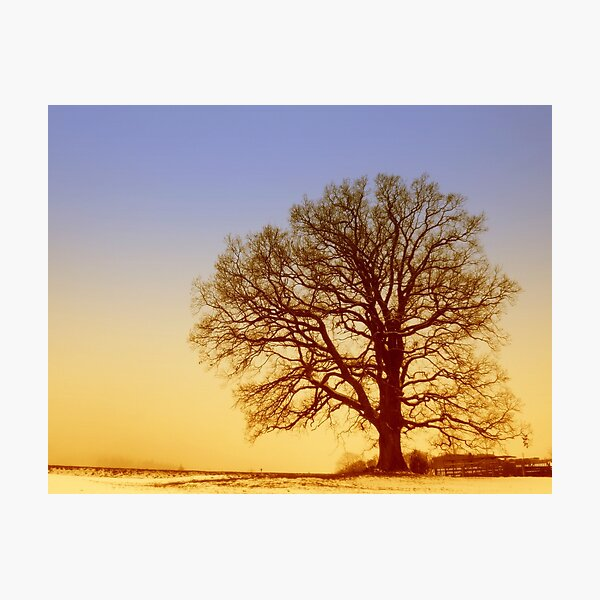 Tree Silhouette in Twilight Photographic Print