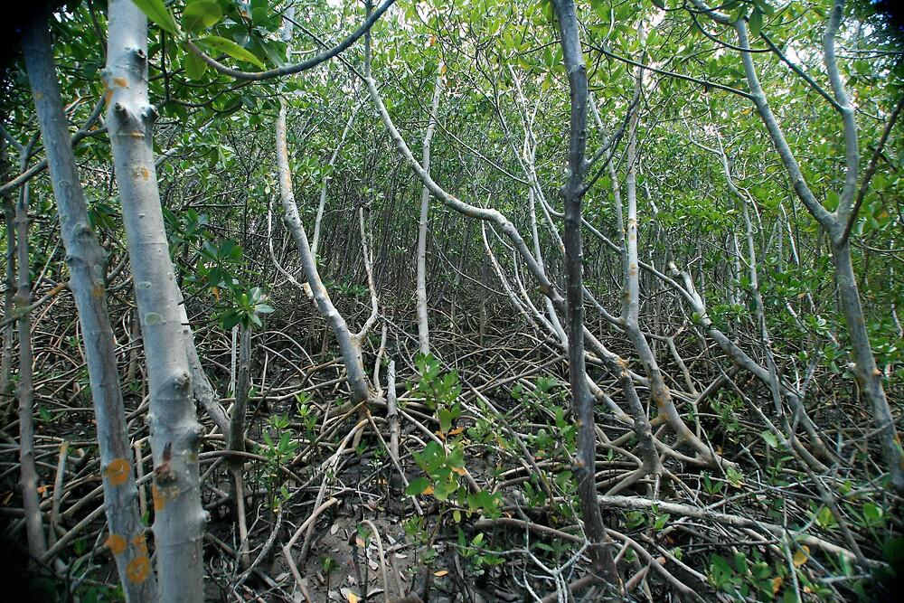 Mangrove by Ricky Howard