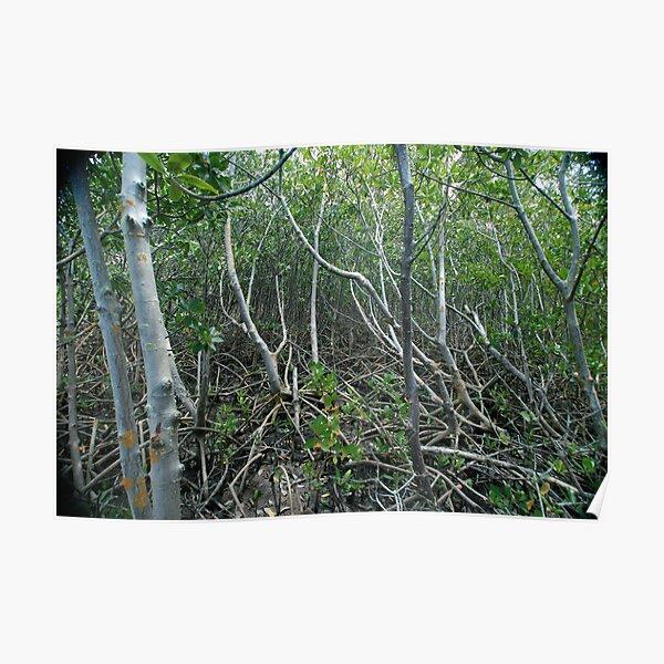 Mangrove Poster