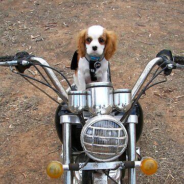 Biker Dude by daverach1